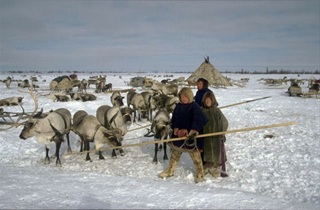 arctic indigenous peoples arctic centre university of lapland