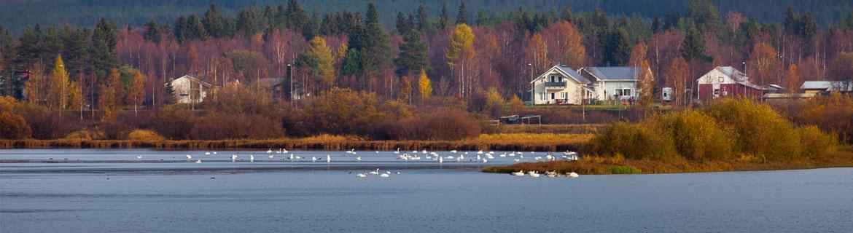 1170-pohja-Ounasjoki-joutsenet.jpg