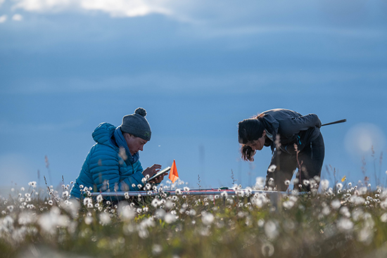 Meticulous on-the-ground observations provide critical insights into how tundra vegetation is changing_credit_Jeffrey Kerby_National Geographic Society-www.jpg
